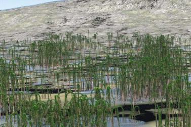Ázsia legrégebbi fosszilizálódott erdejét fedezték fel kínai kutatók