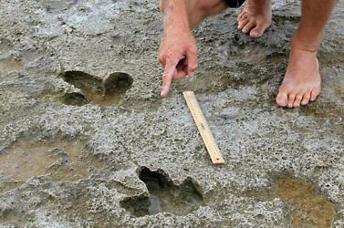Rejtélyes őshüllő lábnyomait találták meg