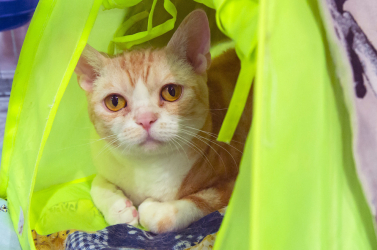Nem egy pszichopata követte el a londoni macskagyilkosságokat