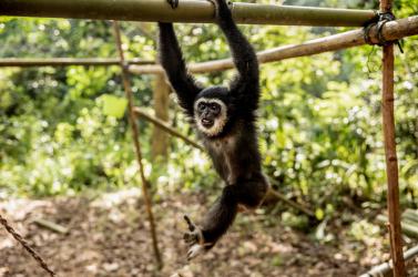 A kihalás széléről hozták vissza a világ legveszélyeztetettebb faját