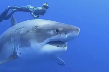 Óriási cápát vettek videóra a partok közelében