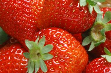 Ültessen epret a Nyárasdi AGROCENTRUM termékeivel!