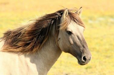 Egy ló megtrollkodta a terhesfotózást (FOTÓK)