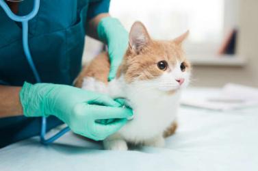 A háziállatokra is veszélyesek lehetnek az új vírusmutációk