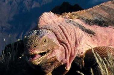 Már csak 221 egyed él ebből a kihalás szélén álló állatfajból