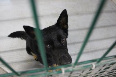 """""""A menhelyről származó kutyus semmivel sem értéktelenebb a többinél!"""" (VIDEÓ)"""