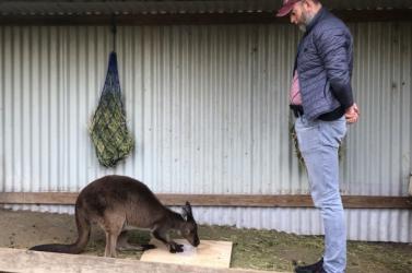 A kenguruk akutyákhoz hasonlóan képesekkommunikálni(videó)