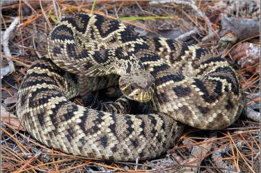 A kígyó lehet az új koronavírus gazdaállata kínai tudósok szerint