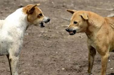 Hat gyereket marcangoltak halálra kóbor kutyák