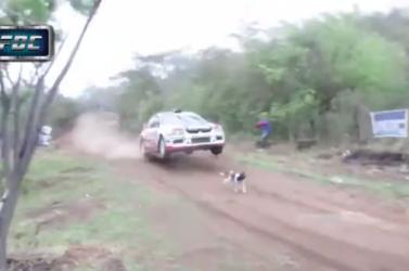 Hihetetlen, de ez a kutya élve megúszta a rallyversenyt