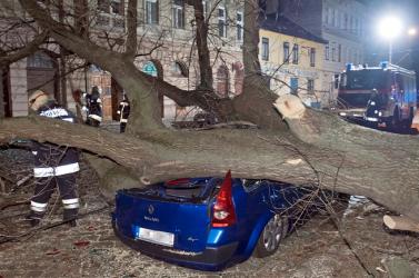 DECEMBERI VIHAR: Kidőlt fák zuhantak parkoló autókra