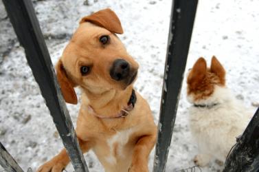 Egyre több az állatkínzásos eset, a tettesek mégsem kerülnek börtönbe