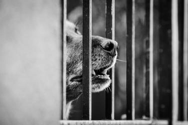 Megkéselt egy kutyát a férfi, megússza büntetés nélkül a történteket