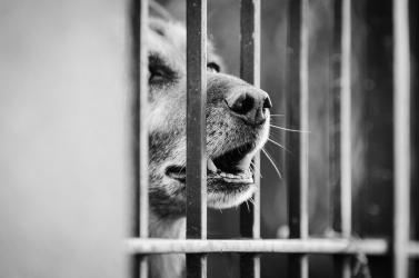 Légpuskával lőtt le egy kutyát egy férfi Magyarországon