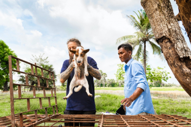 Állatvédők segítségével bezártak egy nagy kutyavágóhidat