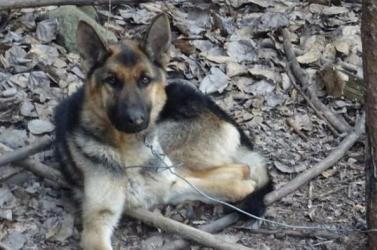 Több mint 1500 kutyát lőttek le tavaly, állítólag orvvadászat miatt