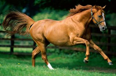 Mongol lóhúst, közte több kilónyi nemi szervet próbáltak becsempészni az USA-ba