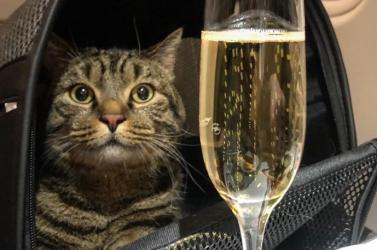 Trükkösen akarta dagadt macskáját felvinni a repülőre, a baj ott történt, hogy nagy dobra verte