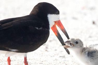 A szárazföldi gerinces fajok csaknem egyötödét adják-veszik
