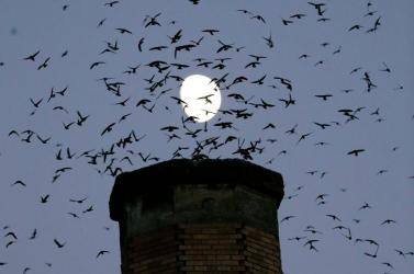 Az eddig véltnél ötször gyorsabban halnak ki a madárfajok