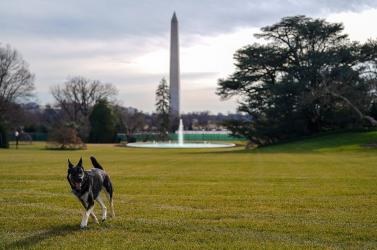 Terrorizálta az amerikai elnök kutyája a fehér házi alkalmazottakat, berakják egy tanfolyamra