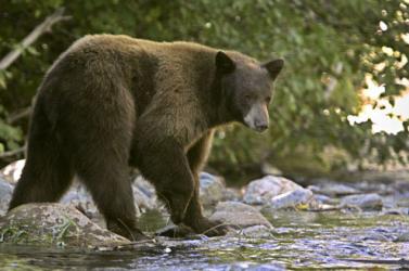 BORZALOM: Négy emberrel végzett egy medve