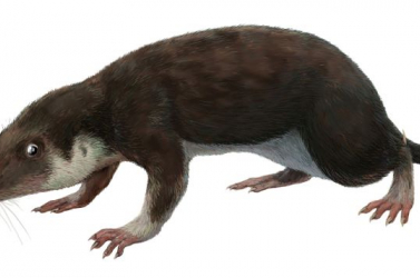 Az utolsó dinoszauruszok korában élt egy különös emlős