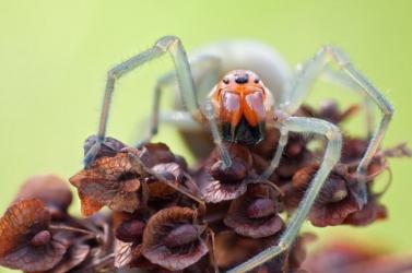 Szlovákia legveszélyesebb pókja mart meg egy nőt