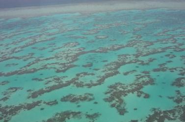 A tengeri hőhullámok halálos fenyegetést jelentenek a korallzátonyokra