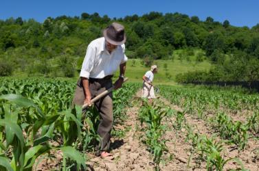 Borzalmas körülmények között dolgoztattak romániai vendégmunkásokat egy holland farmon