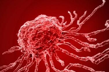 Az eddigi legtöbb emberi sejtet tartalmazó egérembriót hozták létre amerikai kutatók