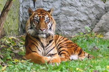 Borba áztatott tigristetemet találtak egy férfi házában