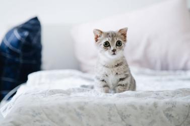 A gyerekekhez hasonlóan a macskák is kialakítanak kötődést gondozóikhoz