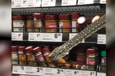 Fűszerek közül kikandikáló méretes piton okozott riadalmat egy élelmiszerboltban – videó