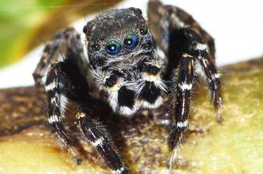 Karl Lagerfeldről neveztek el egy pókfajt hamburgi kutatók