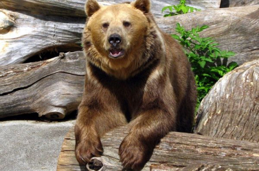 """Nem látták a """"szlovák"""" medvét Magyarországon"""