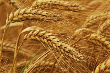MEZŐGAZDASÁGI SOKK: Hatalmas károkat szenvedtek idén a gazdák a dél-szlovákiai régióban