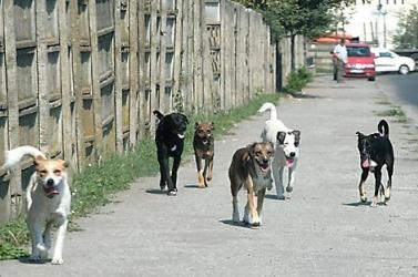 Állatmenhely létrehozását javasolják Dunaszerdahelyen