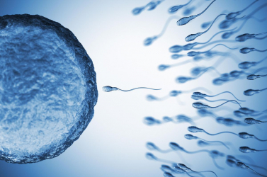 Kiderült, hogyan hat a spermára az mRNS-oltás