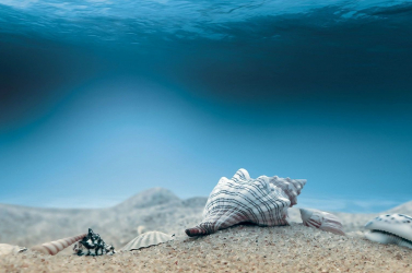 A tengeri kagylók és férgek is hatással lehetnek a klímára