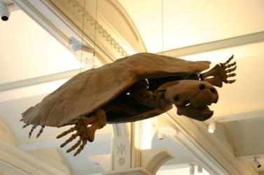 A világ legnagyobb ismert teknősének különleges fosszíliáját fedezték fel Dél-Amerikában
