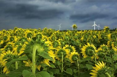 Haszonnövények vadon élő rokonainak magjait gyűjtik tudósok a klímaváltozás elleni harcban