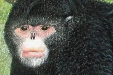 Elvis-frizurás majmot fedeztek fel