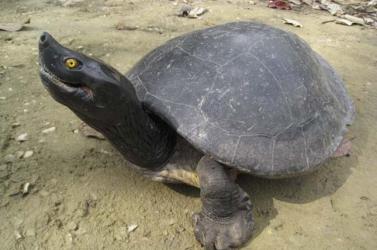 Több ezer ritka teknőst mentettek meg Madagaszkáron