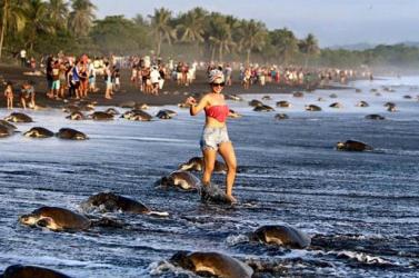 A teknősök miatt helyeztek át egy luxusesküvőt