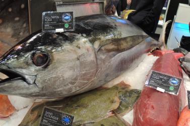 Szuperrekorddal indultak az újévi árverések a halpiacon