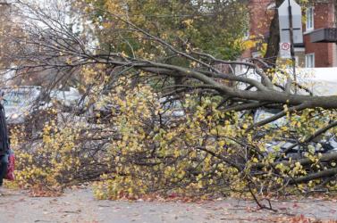 Vihar miatt százezrek maradtak áram nélkül Québec tartományban