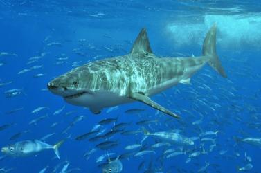 Elhunyt Erich Ritter világhírű cápakutató