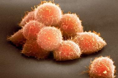 Embriószerű kísérleti modellt hoztak létre kutatók emberi őssejtekből
