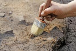 Először fedeztek fel fosszilis növényi gumit